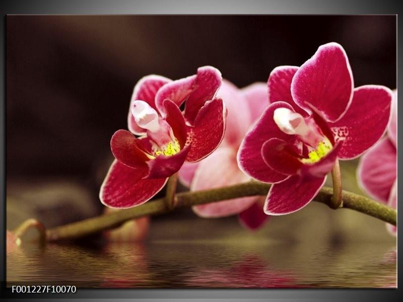 Glas schilderij Orchidee | Zwart, Rood