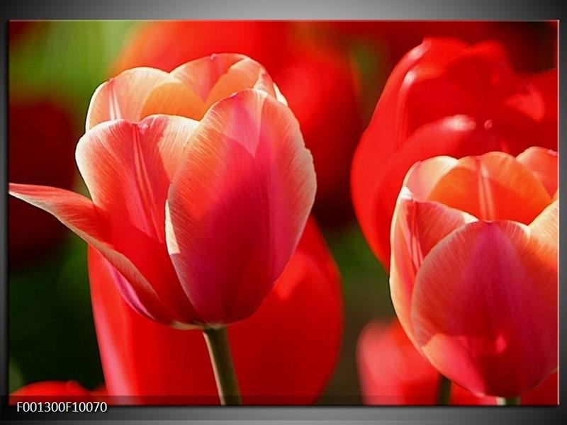 Glas schilderij Tulpen | Rood, Wit, Zwart