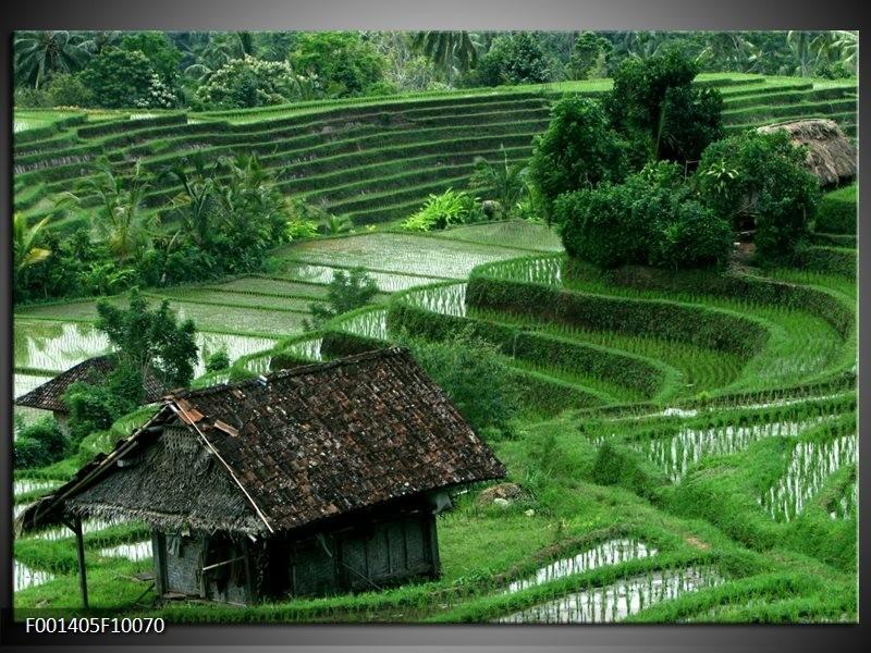 Foto canvas schilderij Natuur | Groen, Wit,