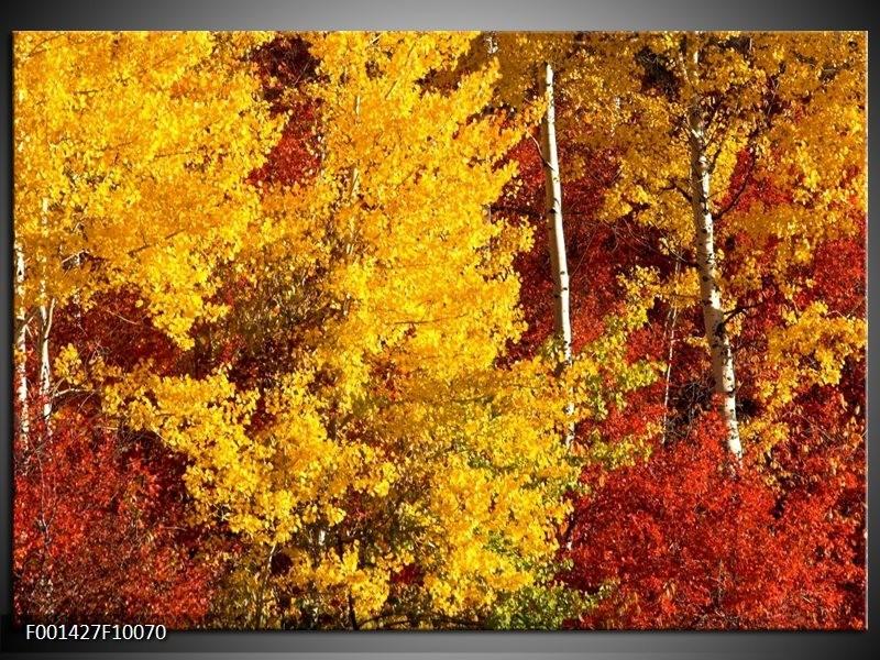 Glas schilderij Herfst | Geel, Oranje
