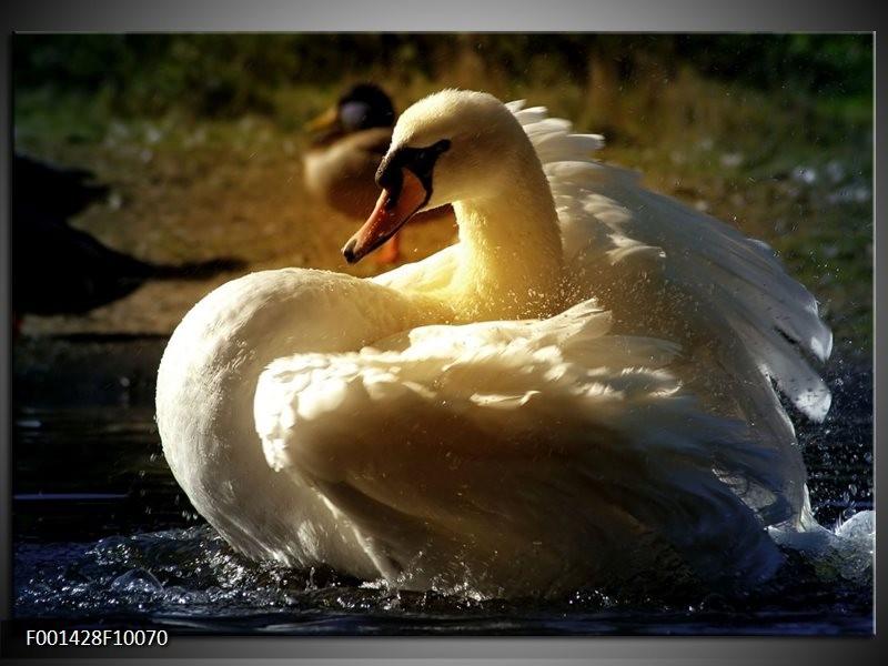 Glas schilderij Zwaan | Wit, Geel, Grijs