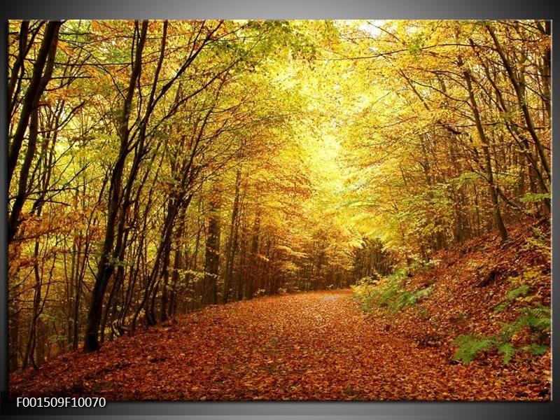 Glas schilderij Natuur | Geel, Groen, Bruin