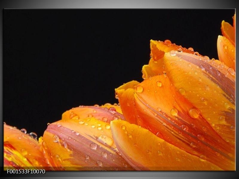 Foto canvas schilderij Tulp   Geel, Oranje, Zwart