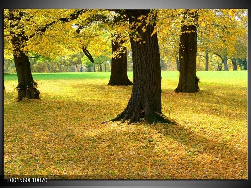 Foto canvas schilderij Natuur | Geel, Groen, Zwart