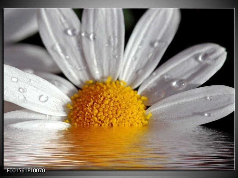 Glas schilderij Bloem | Geel, Wit