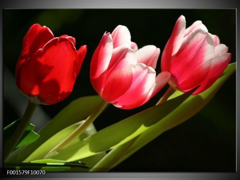 Glas schilderij Tulpen | Rood, Wit, Groen