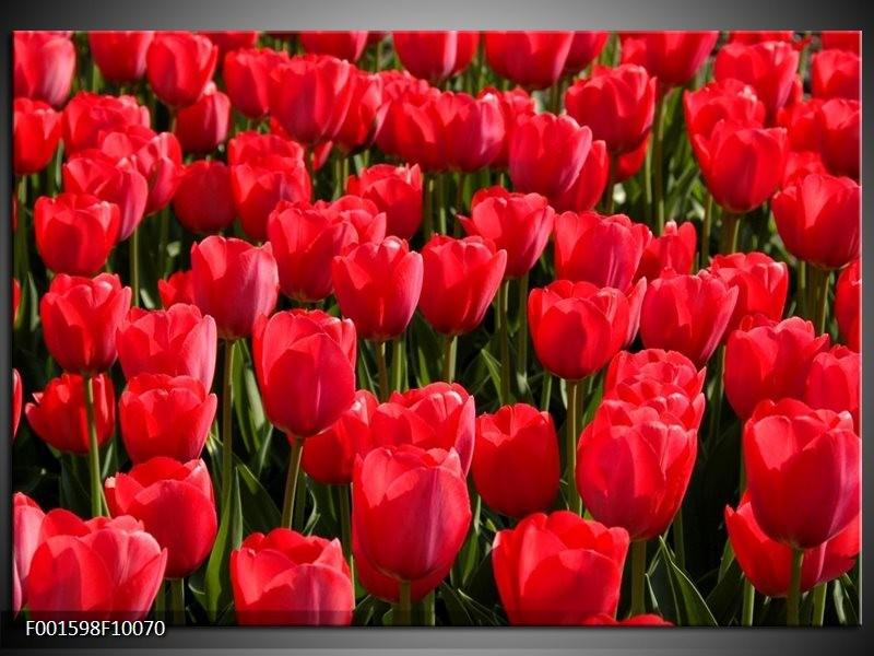 Glas schilderij Tulpen | Rood, Groen, Grijs