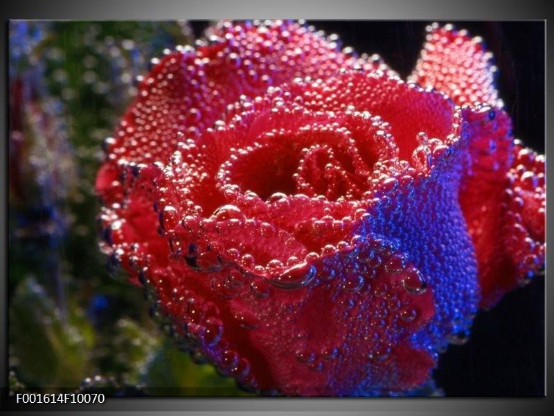 Glas schilderij Roos   Rood, Blauw, Wit