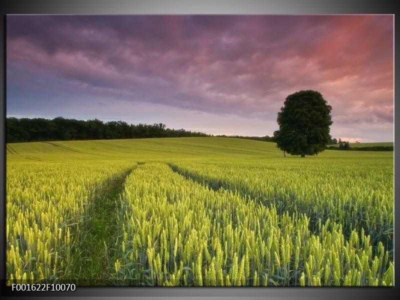 Foto canvas schilderij Gras | Groen, Paars, Blauw