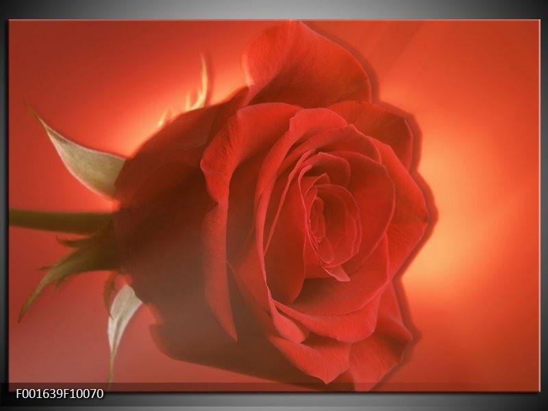Glas schilderij Roos | Rood, Oranje, Geel