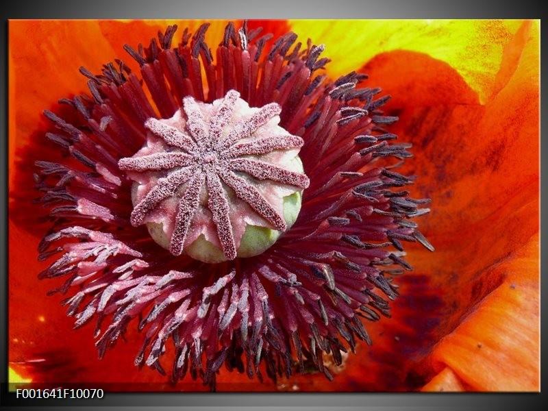 Glas schilderij Bloem | Rood, Wit