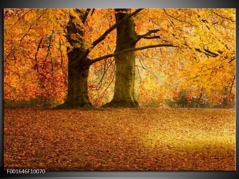 Foto canvas schilderij Bomen | Geel, Groen, Bruin