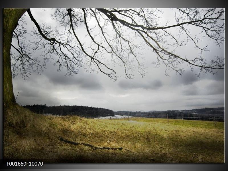 Glas schilderij natuur grijs groen zwart for Schilderij natuur