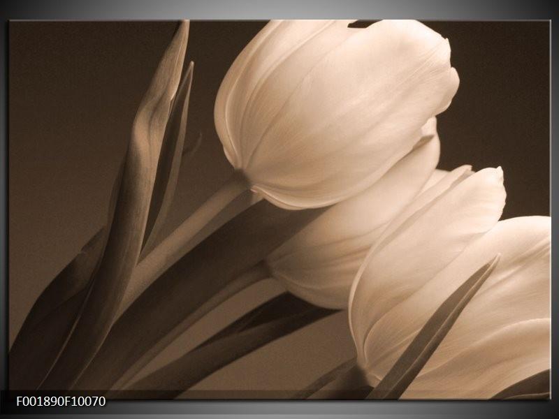 Glas schilderij Tulpen   Sepia, Bruin