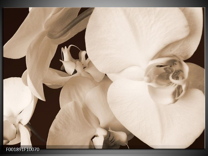 Foto canvas schilderij Orchidee | Sepia, Bruin