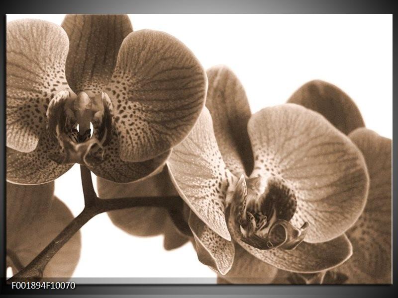 Glas schilderij Orchidee   Sepia