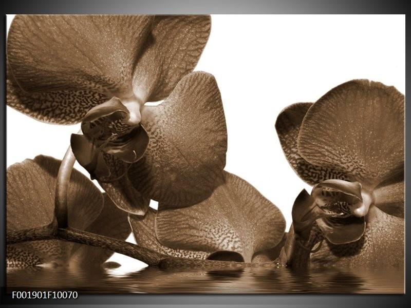 Foto canvas schilderij Orchidee   Sepia, Bruin