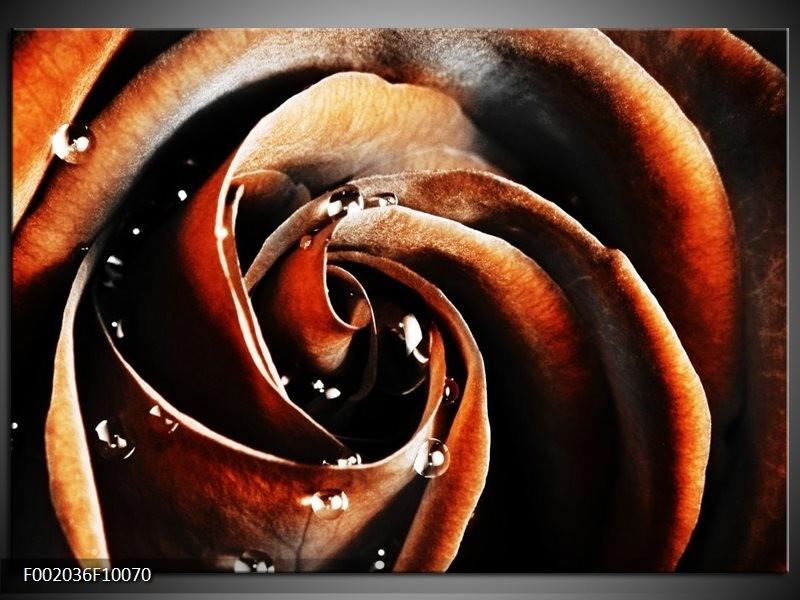 Foto canvas schilderij Roos | Bruin, Zwart, Wit