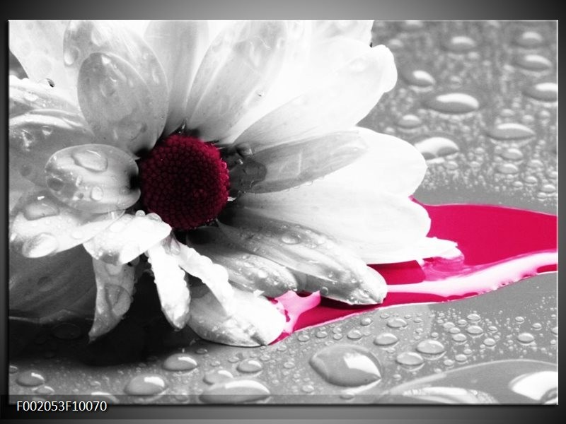 Foto canvas schilderij Bloem   Grijs, Wit, Roze