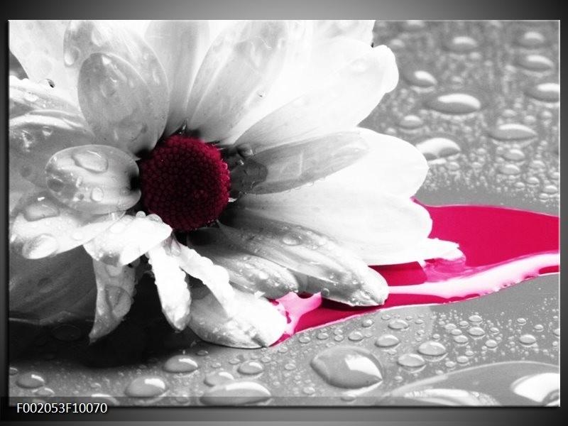 Glas schilderij Bloem   Grijs, Wit, Roze