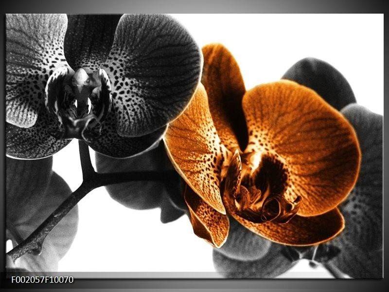 Foto canvas schilderij Orchidee | Zwart, Wit, Oranje