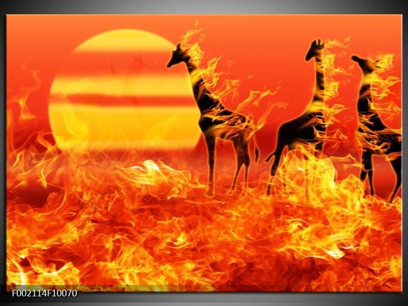 Foto canvas schilderij Dieren | Zwart, Oranje, Geel