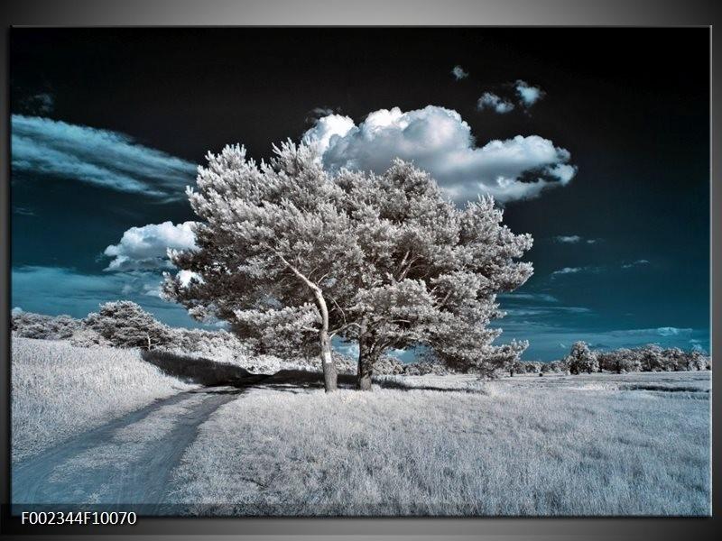 Foto canvas schilderij Boom   Grijs, Blauw, Wit