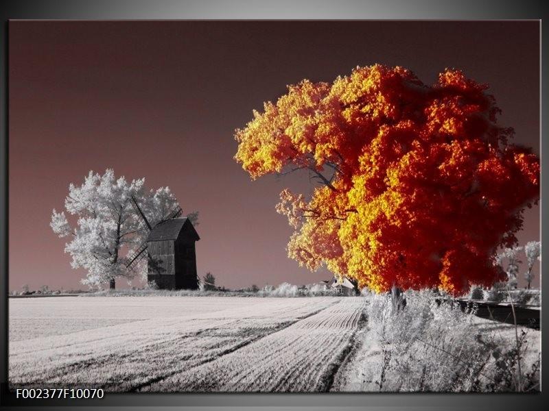 Foto canvas schilderij Natuur | Geel, Grijs, Wit