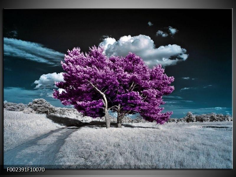 Foto canvas schilderij Natuur | Paars, Blauw, Wit