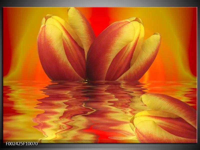 Foto canvas schilderij Tulp | Geel, Rood