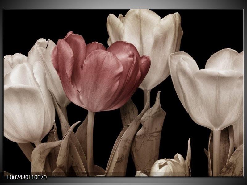 Foto canvas schilderij Tulpen | Bruin, Wit, Zwart