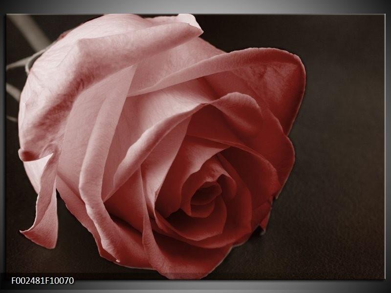 Foto canvas schilderij Roos | Bruin, Wit, Zwart