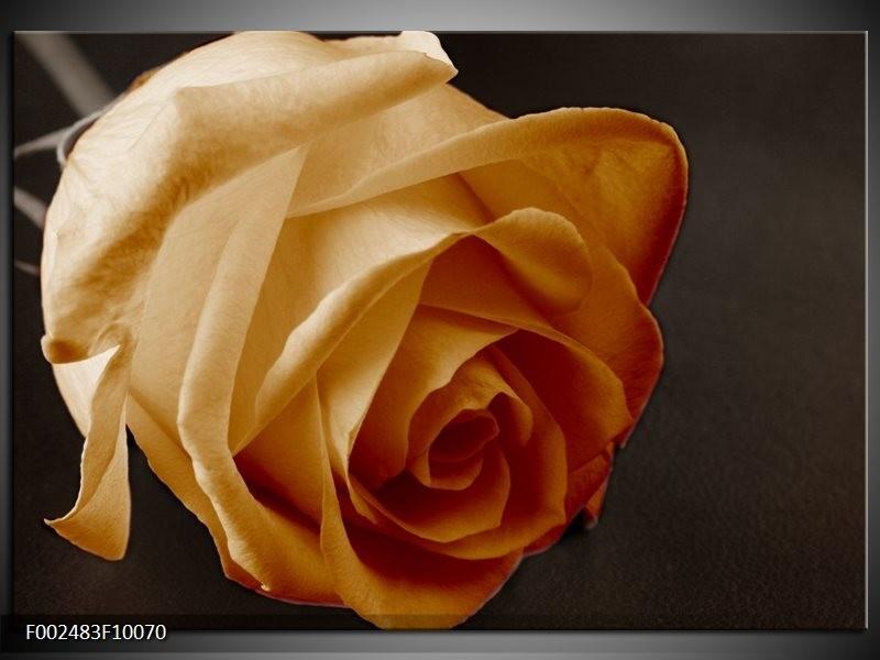 Foto canvas schilderij Roos | Geel, Wit, Zwart