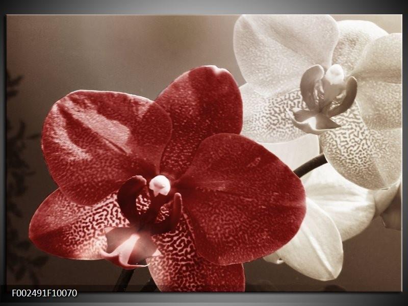 Foto canvas schilderij Orchidee   Bruin, Wit, Grijs