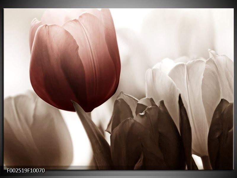 Foto canvas schilderij Tulpen | Bruin, Wit, Grijs