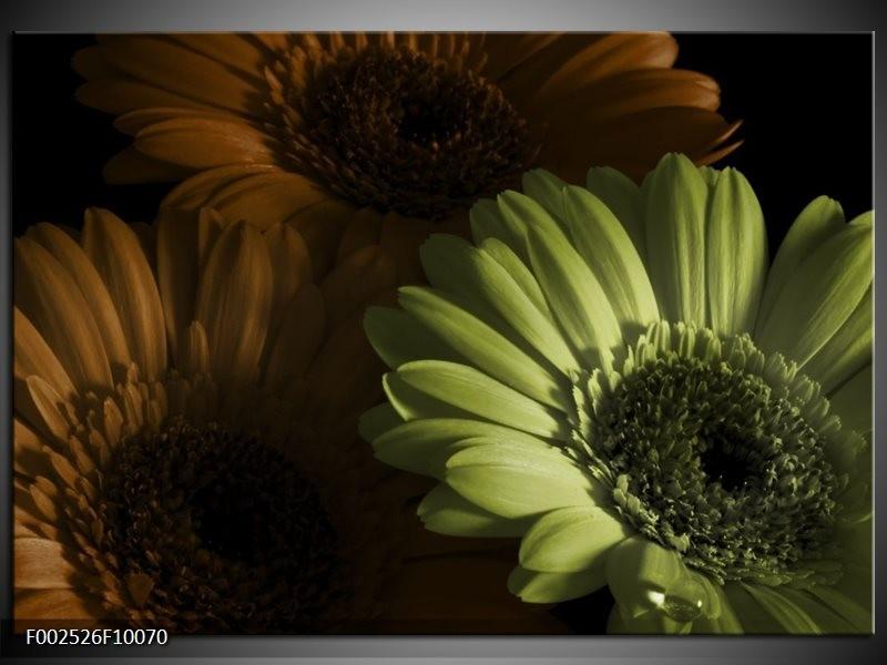 Foto canvas schilderij Bloem | Bruin, Groen