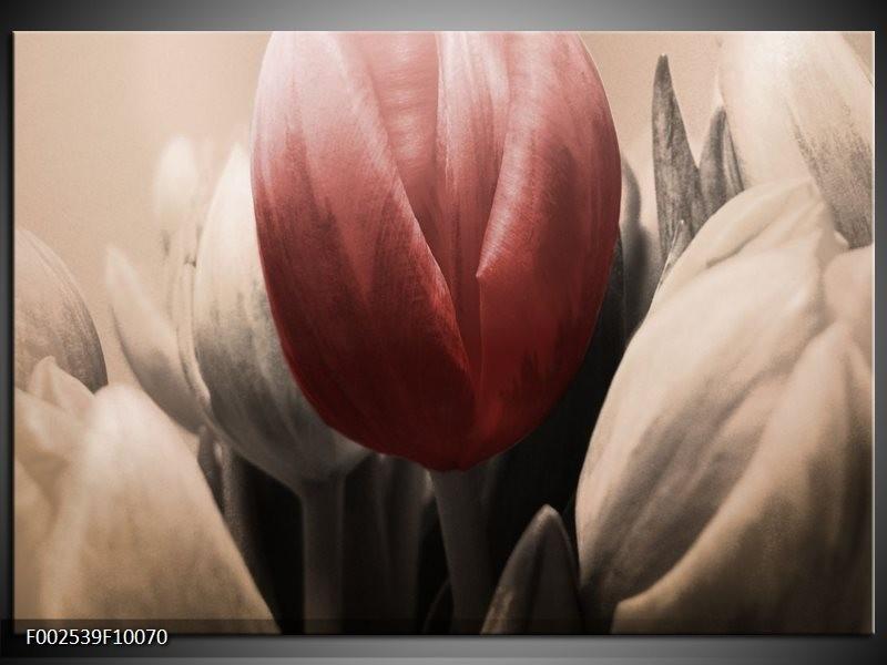 Foto canvas schilderij Tulp | Rood, Grijs, Zwart