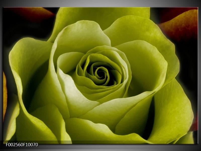 Foto canvas schilderij Roos | Groen, Wit, Zwart