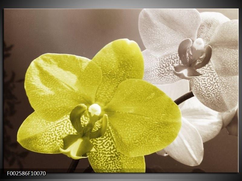 Foto canvas schilderij Orchidee | Wit, Groen, Grijs