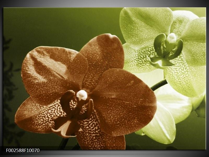 Foto canvas schilderij Orchidee | Groen, Bruin, Wit