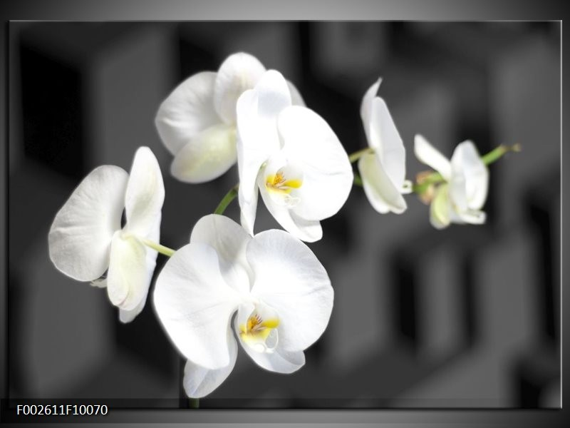 Foto canvas schilderij Orchidee | Zwart, Wit, Grijs