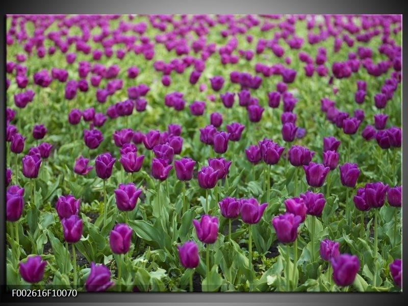 Foto canvas schilderij Tulpen | Paars, Groen