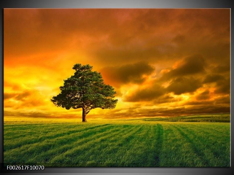 Foto canvas schilderij Boom | Groen, Geel, Bruin