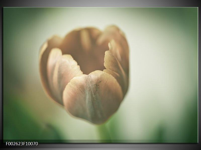 Foto canvas schilderij Tulp | Grijs, Groen, Wit