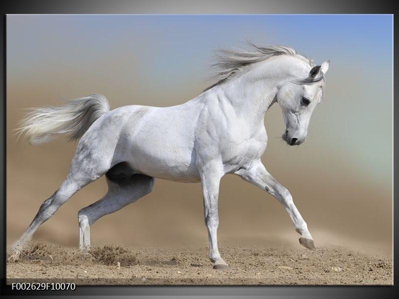 Foto canvas schilderij Paard   Wit, Grijs