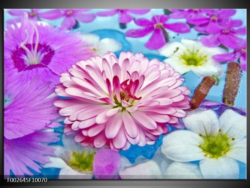 Foto canvas schilderij Bloem | Paars, Wit, Rood