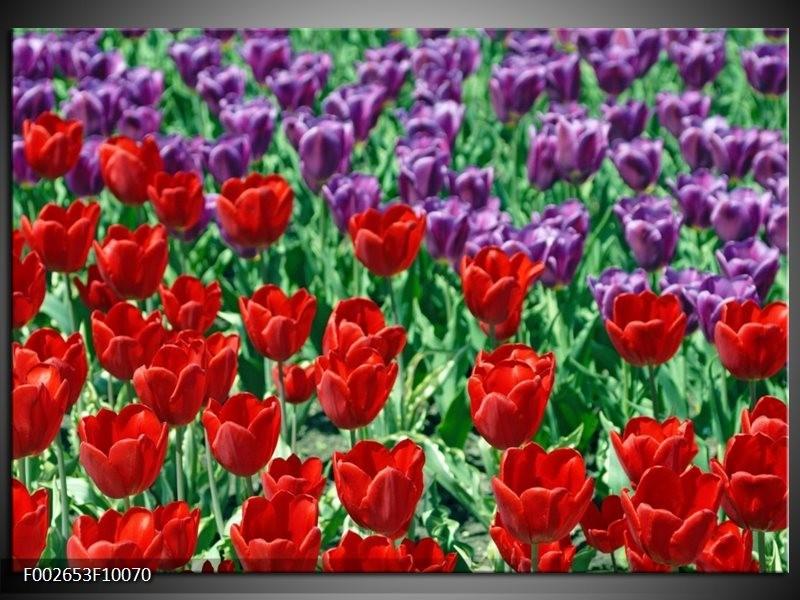 Foto canvas schilderij Tulp | Rood, Paars, Groen