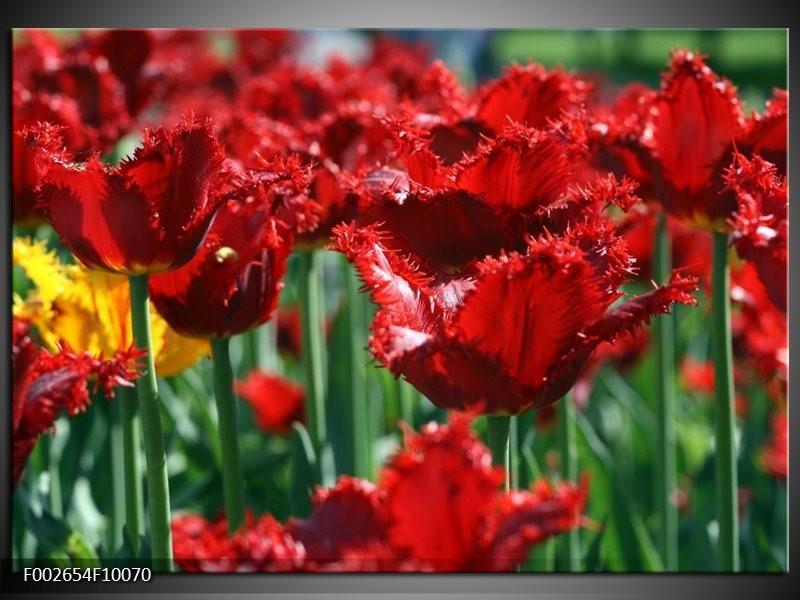 Foto canvas schilderij Tulp | Rood, Groen, Geel