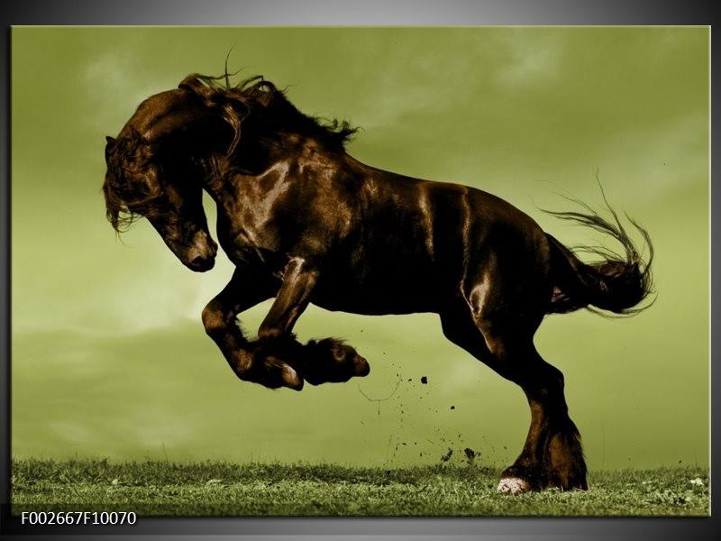 Foto canvas schilderij Paard   Bruin, Groen, Zwart