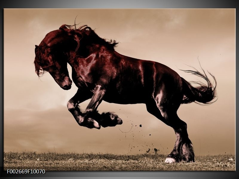 Foto canvas schilderij Paard | Bruin, Grijs, Zwart